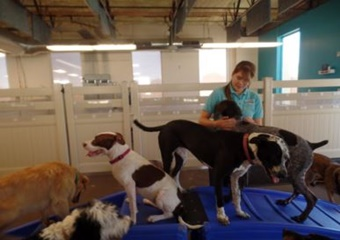 pet boarding and dog daycare in mesa, arizona
