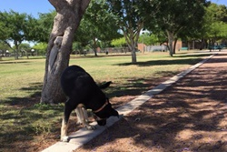 Mitchell dog park pet friendly dog parks in Tempe, Arizona